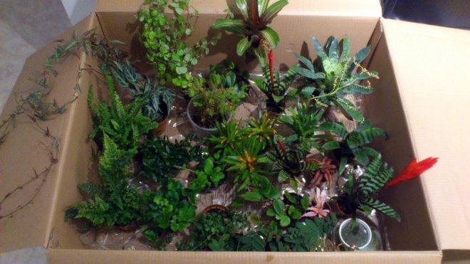 Pflanzenlieferung